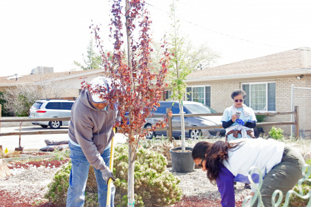 Volunteer to plant neighborhood trees with Tree New Mexico!